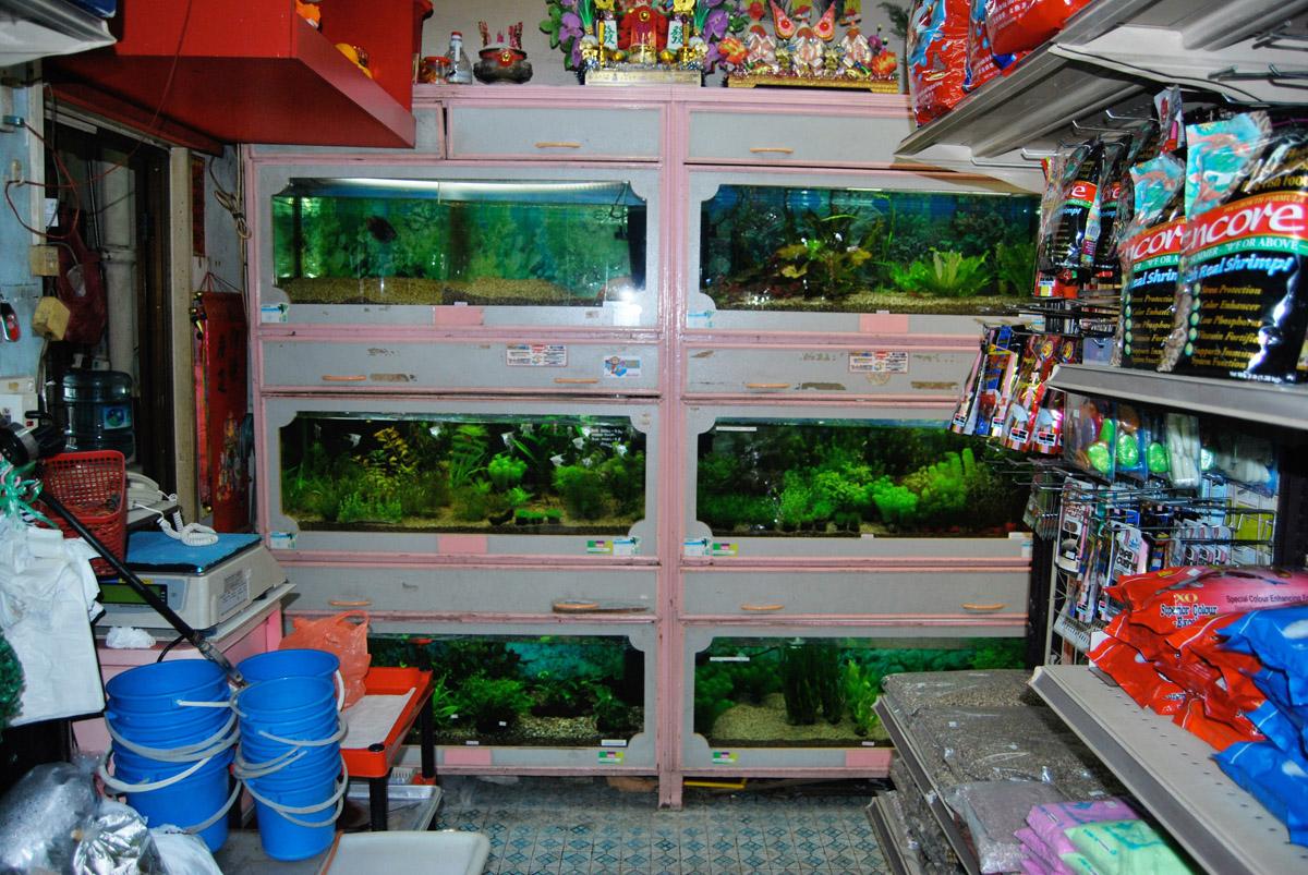 kirti_aquarium