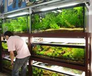 shashi aquarium